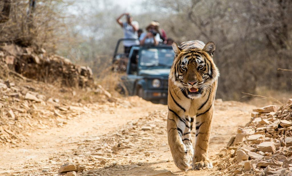 Seeing A Tiger In A Wildlife Sanctuary