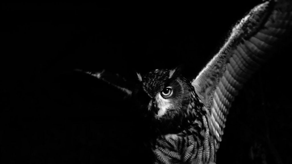 Owls are bad Omen