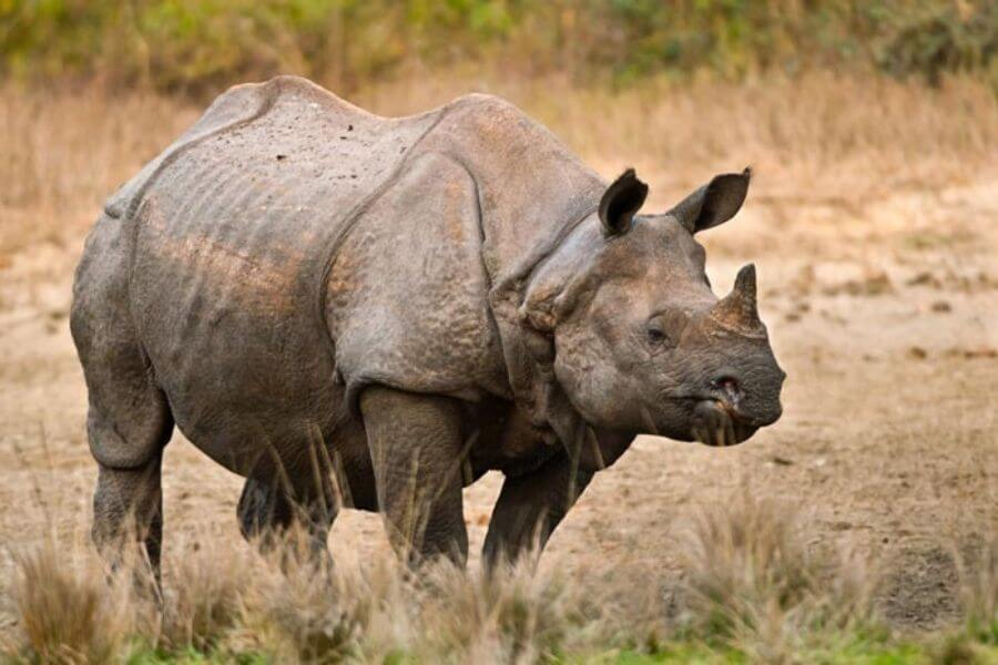 Best place to find one-horned rhinoceros