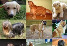 costliest dogs
